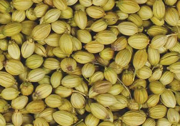 GREENISH YELLOW CORIANDER SEED